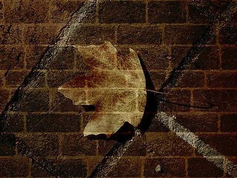 Invisable leaf by Renee Braun