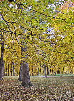 Minding My  Visions by Adri and Ray - Iowa Forest During Autumn