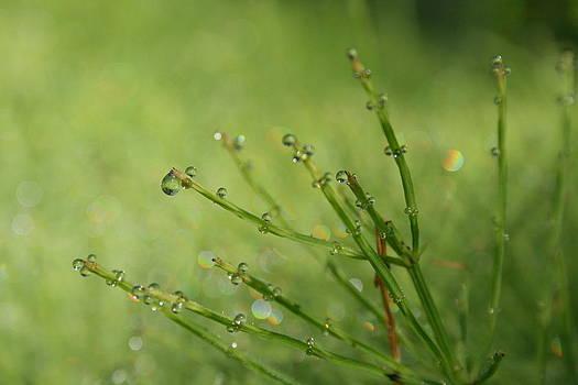 Iridescent horsetail by Monic LaRochelle