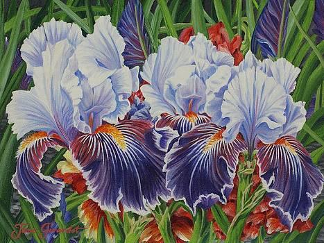 Jane Girardot - Iris Blooms