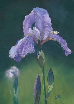 Iris by Calliope Thomas