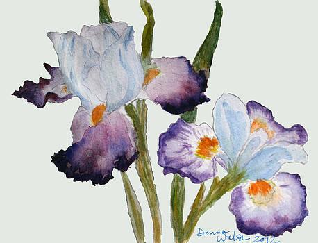 Donna Walsh - Iris