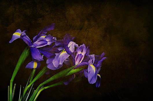 Iris Frolic by Shelly Wickens