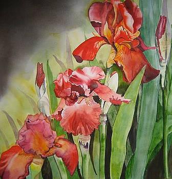 Iris germanica by Stephanie Zobrist