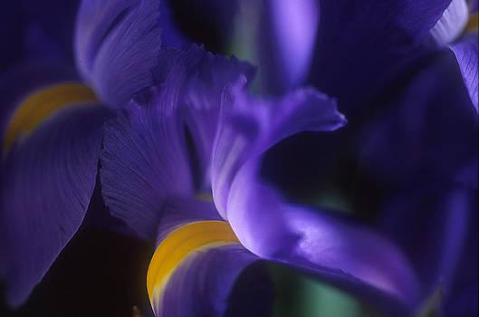 Harold E McCray - Iris I