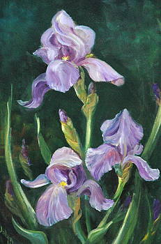 Iris by Jolyn Kuhn