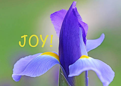 Iris Joy by Beth Fox