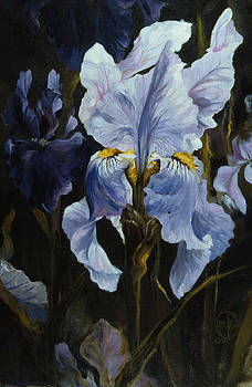 Iris by Lynette Yencho