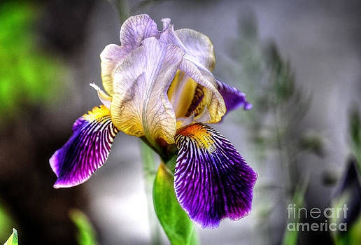 Iris Magic by Skye Ryan-Evans