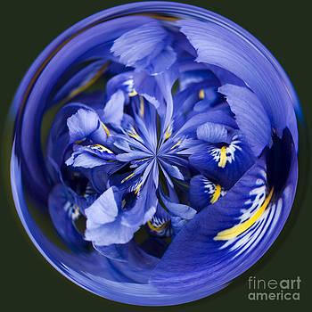 Anne Gilbert - Iris Orb