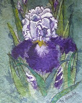 Iris by Reta Haube