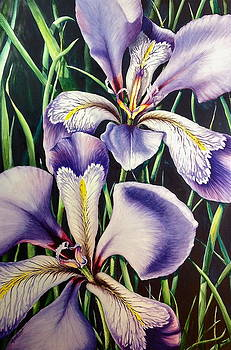 Iris Rhapsody by Michelle East