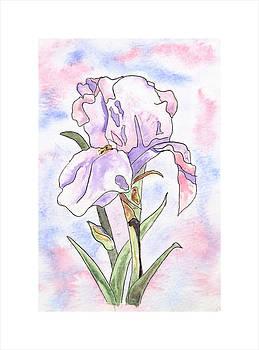 Iris  by Sara Davenport