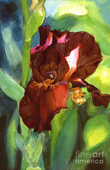 Watercolor of a Tall Bearded Iris in Sienna Red by Greta Corens