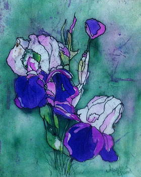 Iris Softness by Martha Efurd