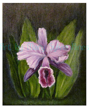 Iris Study v1 by Mary Sylvia Hines