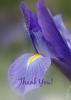 Iris Thank You Card by Mariola Szeliga