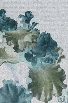 Iris watercolor by Barbara Chachibaya
