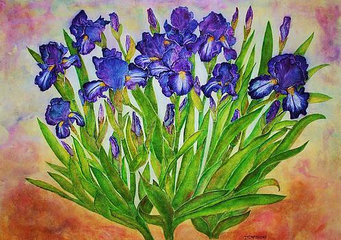 Irises by Janet Immordino