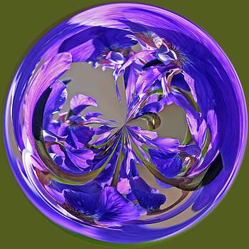 Irises Orb by Liz Mackney