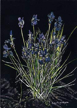 Irises by Robert Goudreau
