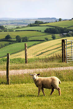 Irish Lamb by Sharon Sefton