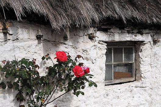 Irish Roses by Sharon Sefton