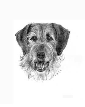 Irish Terrier by Lou Ortiz