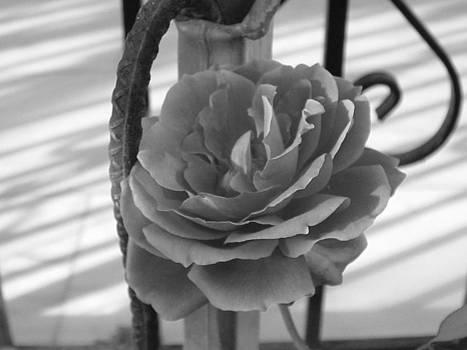 Iron and Rose by Angela Zafiris