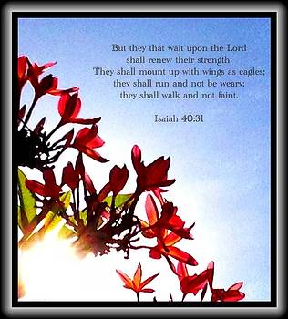 Isaiah 40 31 by Scripture Pictures