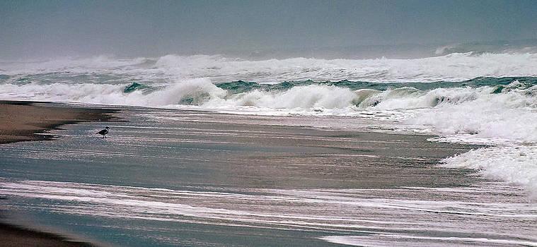 Island Beach 1 by William Walker