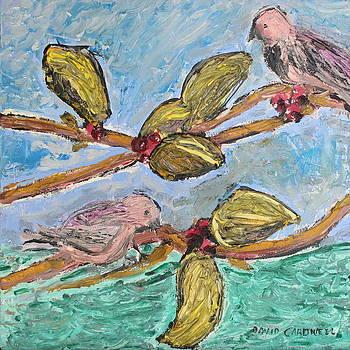 Island Birds by David Cardwell