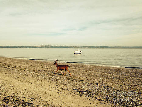 LeLa Becker - Island Deer