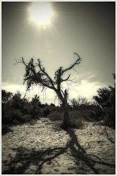 Island Desert Tree by Chris Brehmer Photography