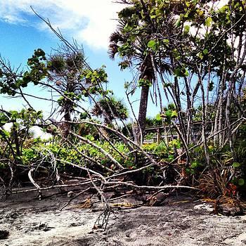 Island Life 3 by Justine Prato