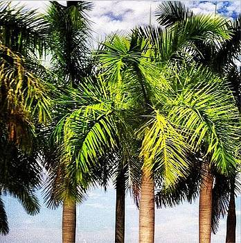 ISLAND LIFE Palms Trees  by Wyn Charlery