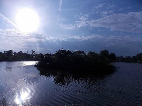 Island Rookery Sunset by Diana Berkofsky