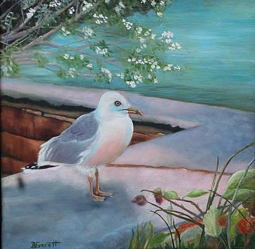 Island Seagull by Brenda Everett