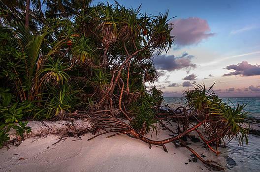 Jenny Rainbow - Island Sunset