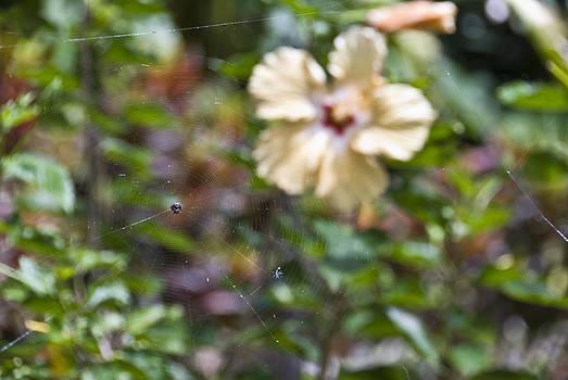 Island Web by Chris Ann Wiggins