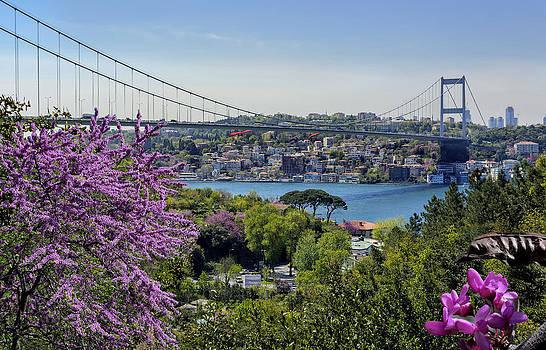 Istanbul Erguvan by Atalay Karacaorenli