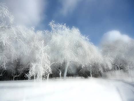 Gothicrow Images - Surreal Snow Covered Trees