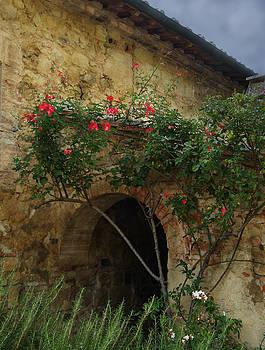 Italian Rose by Deborah Jahier