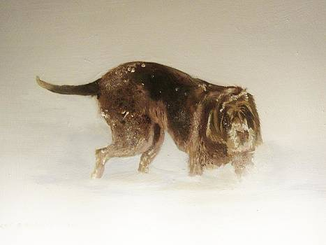 Italian Spinone in the snow by Eric Burgess-Ray