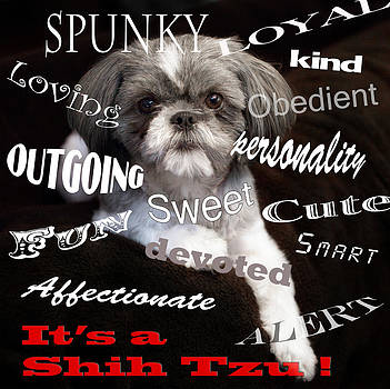 It's a Shih Tzu by William Schmid