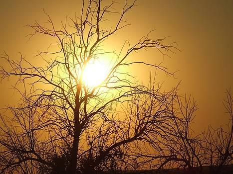 Joe Bledsoe - Its an Orangy sky
