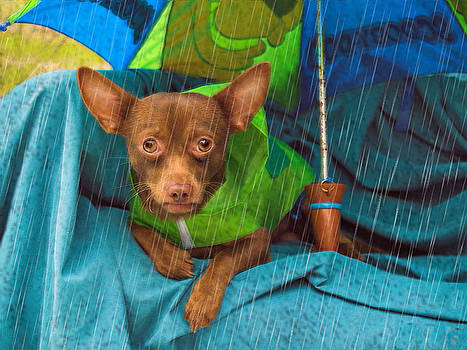 It's Pouring by Carol  Teal