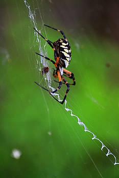 Joe Bledsoe - itsy bitsy spider