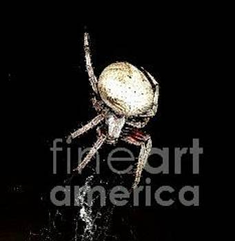 Ittsy Bitsy Spider by Michelle Cawthon