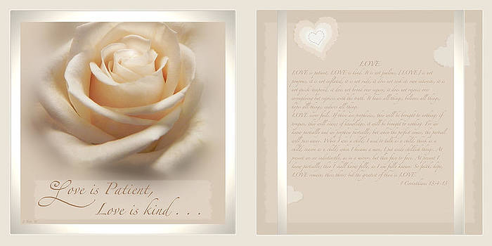 Ivory Rose Love is Patient Duo by Ceci Bahr